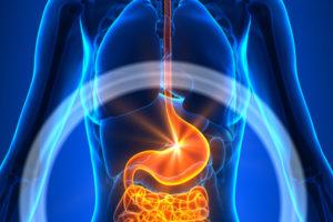 Sodbrennen: Abbildung Speiseröhre und Magen-Darmtrakt